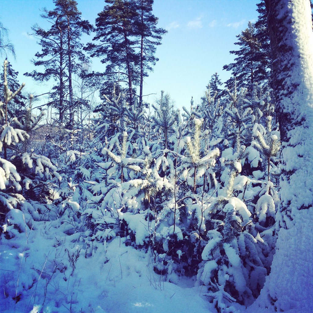 snow-sweden-winter