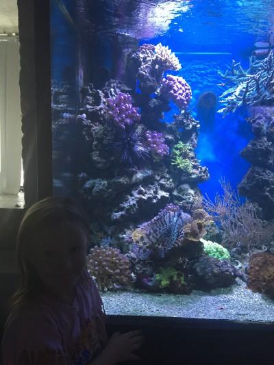 akvarium-sjofartsmuseet