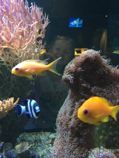 sjofartsmuseet-fiskar